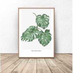 "Plakat botaniczny ""Philodendron"""