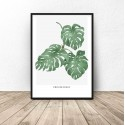 Botanical poster Philodendron