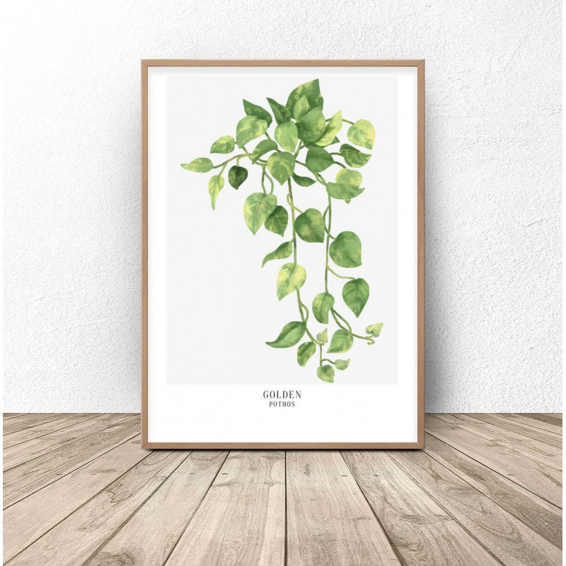 Botanical poster Golden pothos