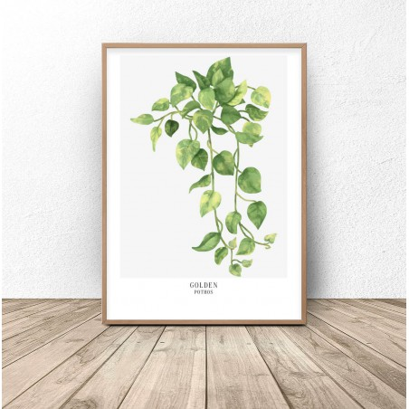 """Plakat botaniczny """"Golden pothos"""""""