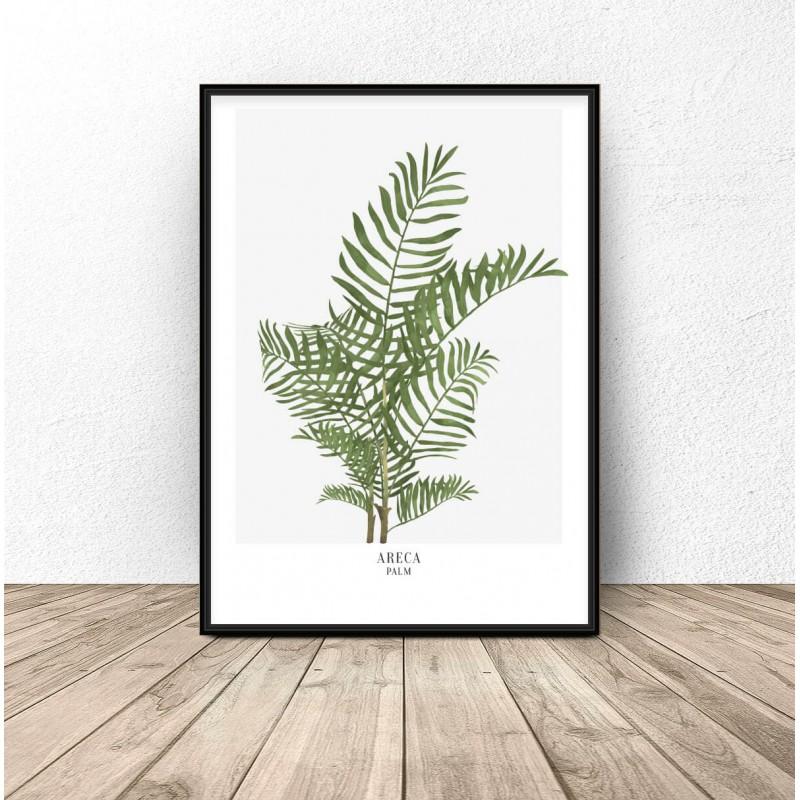 Plakat botaniczny Areca palm