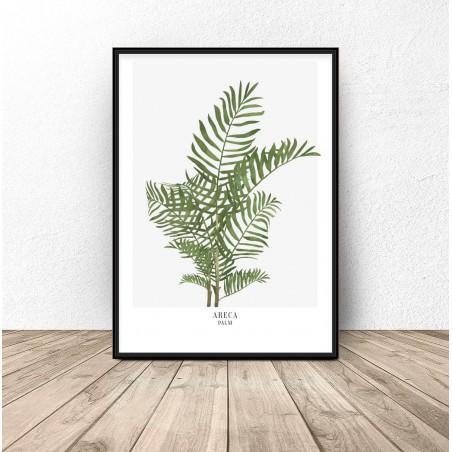 "Plakat botaniczny ""Areca palm"""