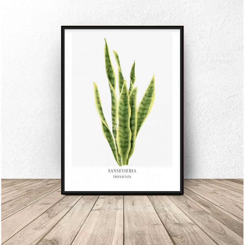 Plakat z rośliną Sansevieria