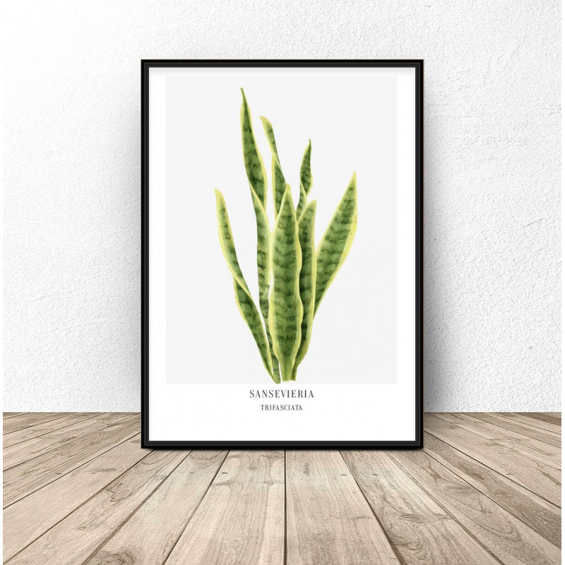 Poster with plant Sansevieria