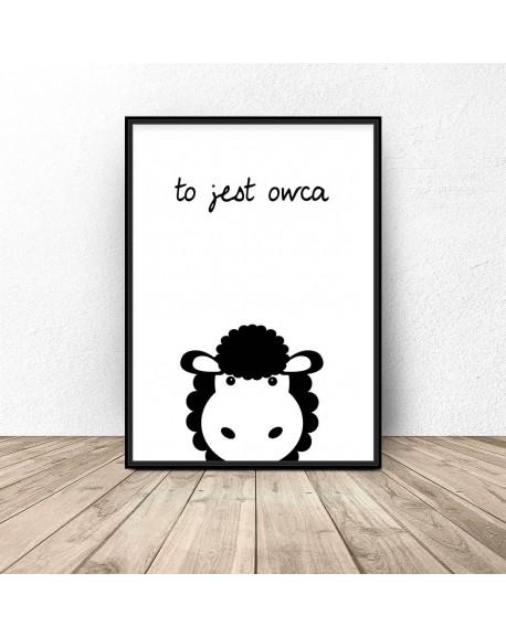 """Plakat dla dzieci """"To jest owca"""""""