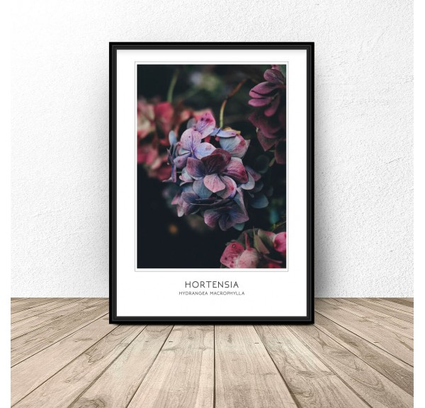 Poster for the wall Hydrangea