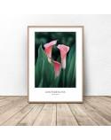 Decorative poster Pink kalie