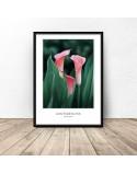 Decorative poster Pink kalie 2