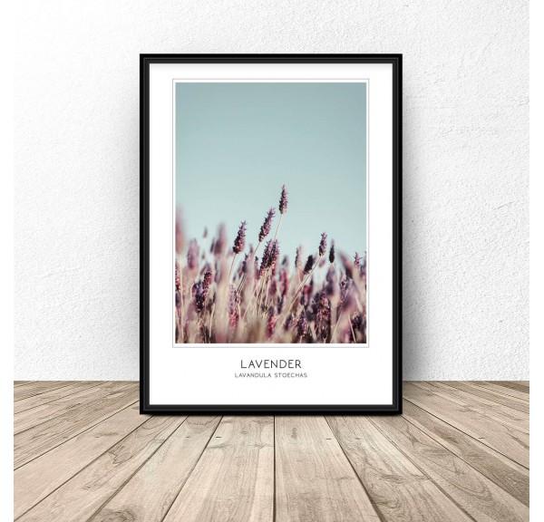 Delicate decorative poster Lavender