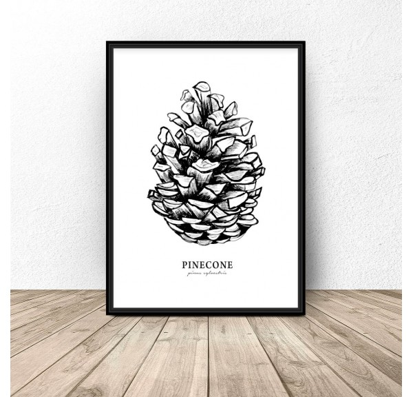 Poster for the wall with a cones Pinecone