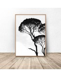 Poster with acacia tree
