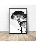 Poster with acacia tree 2