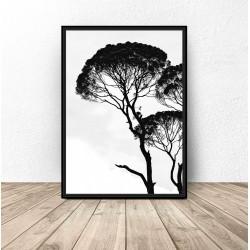 Plakat z drzewem akacjowym