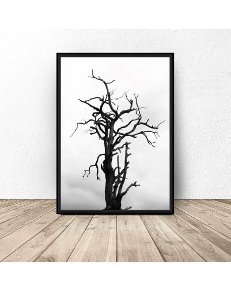 """Grafika na ścianę """"Drzewo"""""""