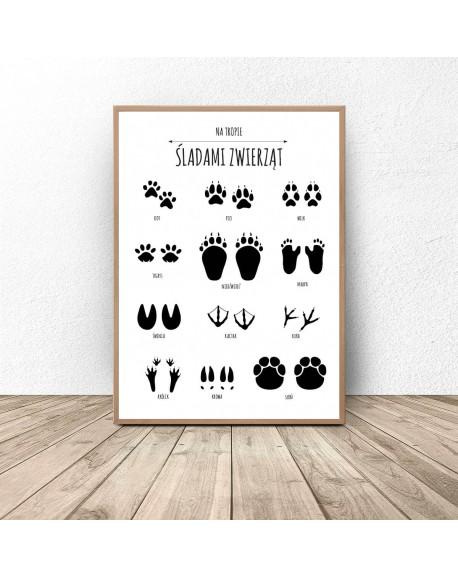 Plakat Dla Dzieci śladami Zwierząt