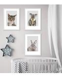 Plakat do pokoju dziecka - miś Koala 5
