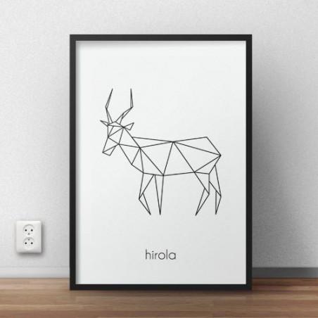 "Plakat z antylopą ""Hirola"""