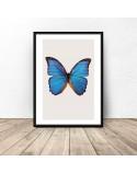 Plakat na ścianę Niebieski motyl