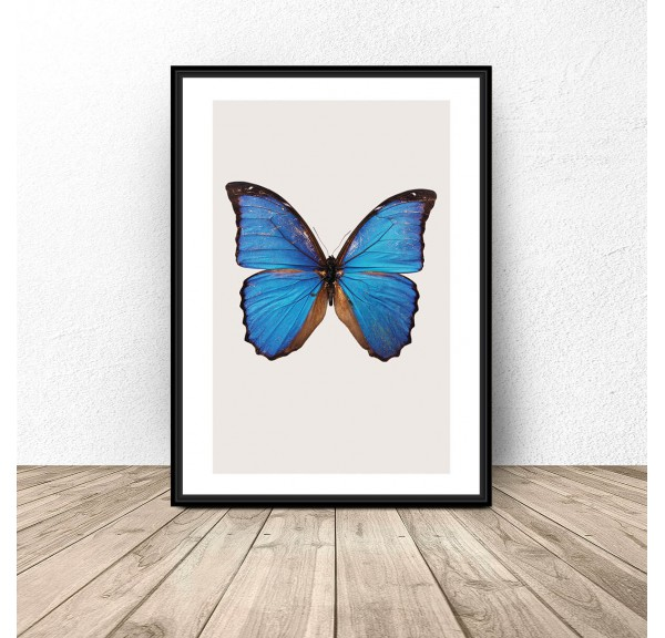Poster for the wall Blue butterfly