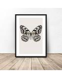 Plakat na ścianę Biały motyl