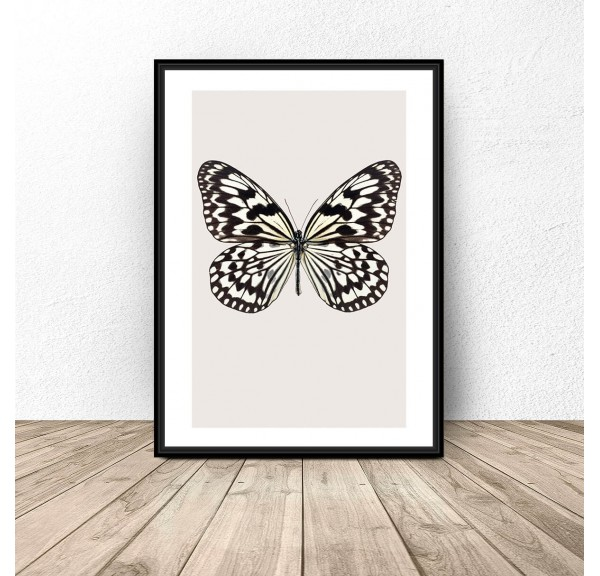 Poster for the wall White butterfly