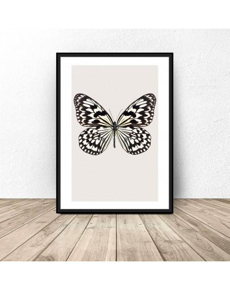 """Plakat na ścianę """"Biały motyl"""""""