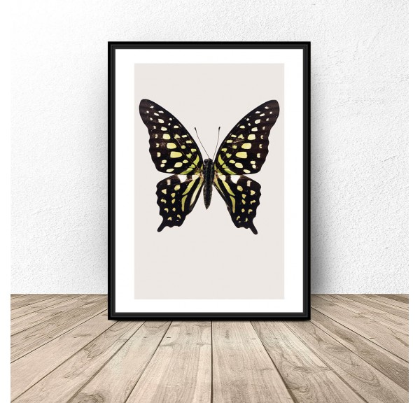 Poster for the wall Black and yellow butterfly