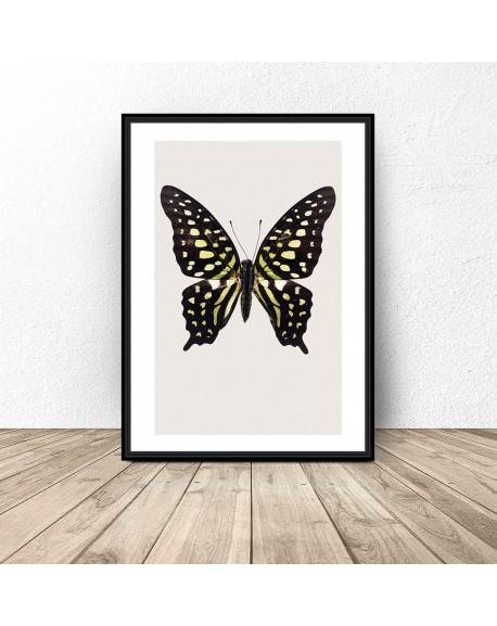 """Plakat na ścianę """"Czarno-żółty motyl"""""""