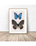 Plakat na ścianę Dwa motyle
