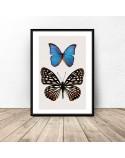 Plakat na ścianę Dwa motyle 2