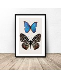 Poster for the wall Two butterflies 2