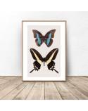 Plakat na ścianę z dwoma motylami