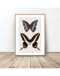 Poster for the wall with two butterflies