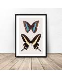 Plakat na ścianę z dwoma motylami 2