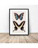 Poster for the wall with two butterflies 2