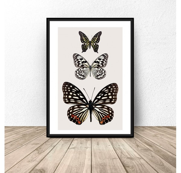 Poster for the wall with three butterflies