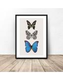 Plakat na ścianę Trzy motyle 2