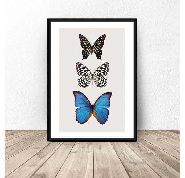 Plakat na ścianę Trzy motyle