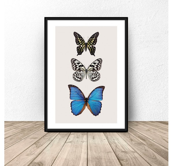 Poster for the wall Three butterflies