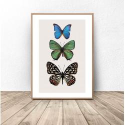 """Plakat na ścianę """"Trzy kolorowe motyle"""""""