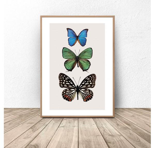 Plakat na ścianę Trzy kolorowe motyle