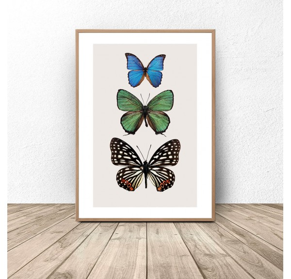 Poster for the wall Three colorful butterflies