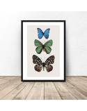 Plakat na ścianę Trzy kolorowe motyle 2