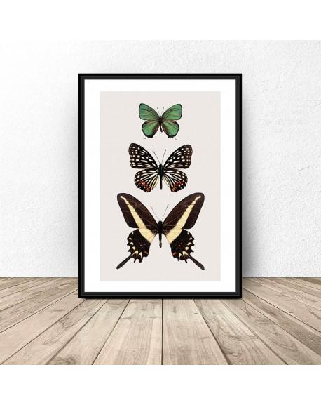 Plakat na ścianę z motylami