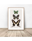 Plakat na ścianę z motylami 2