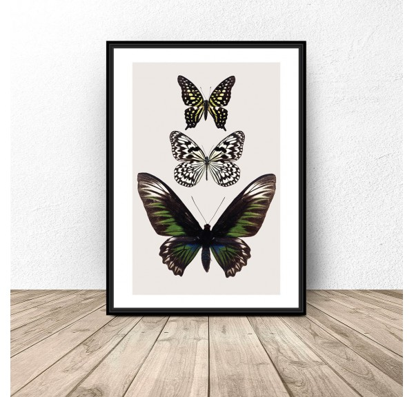 Colorful poster for the wall with butterflies