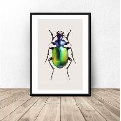 Plakat na ścianę z kolorowym żukiem