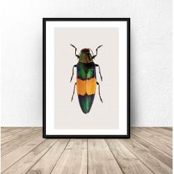 Plakat na ścianę z wielobarwnym żukiem