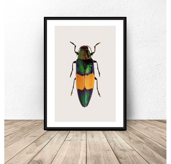 Poster for the wall with a multicolored beetle