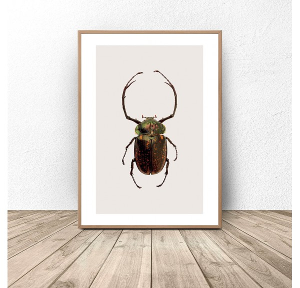 Poster for the wall with a green and gold beetle